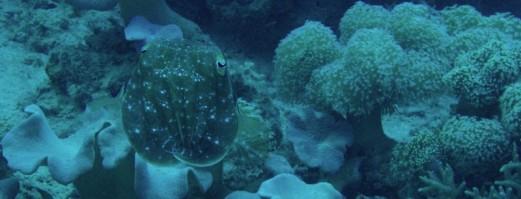 cropped-cuttlefish.jpg