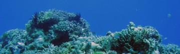 cropped-reefscene.jpg